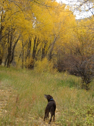 Under the cottonwoods